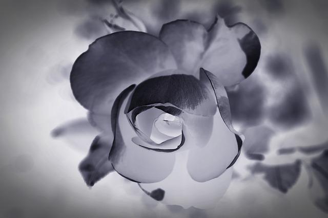 mourning-1665772_640.jpg